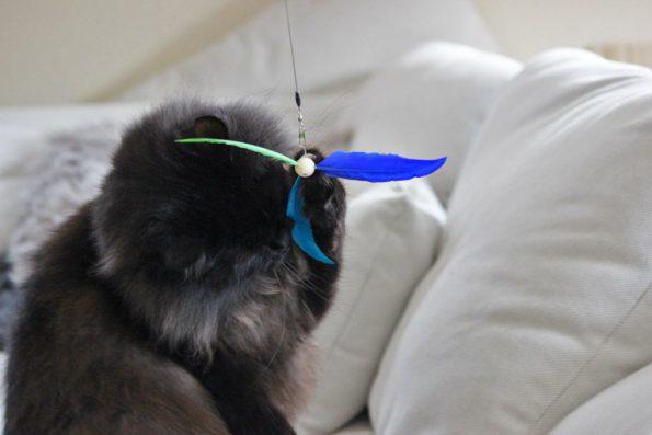 Katzenangel ausziehbar von Healing Cats - Katze fängt