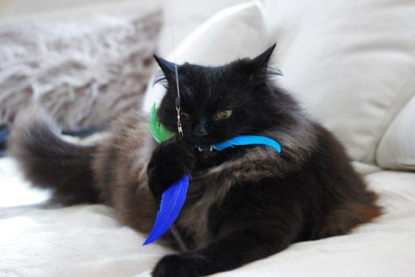Katzenangel ausziehbar Propelleranhänger Healing Cats
