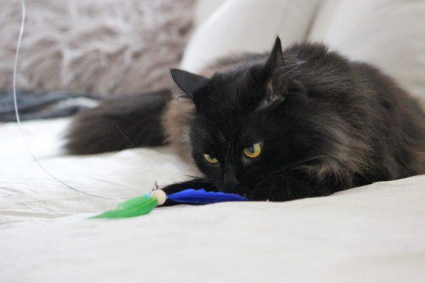 Katzenangel ausziehbar Healing Cats