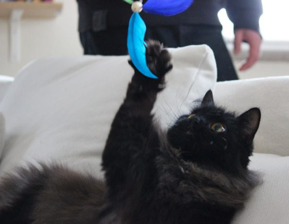 Katzenangel ausziehbar Anhänger Propeller