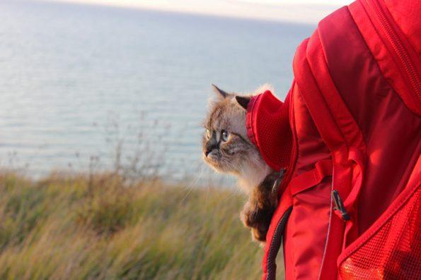 Abenteuerkatze im Rucksack