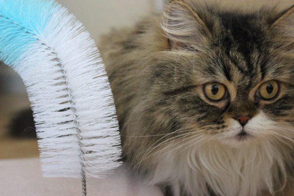 Massagebogen für Katzen