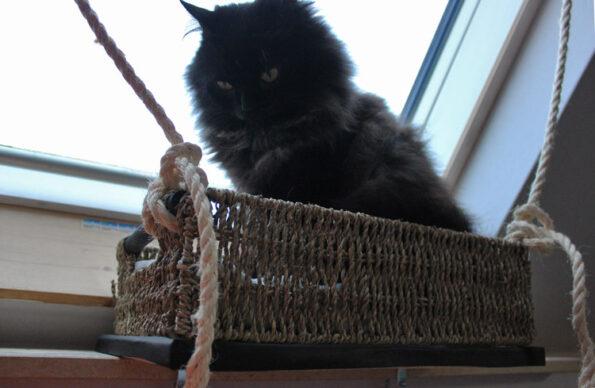 Fensterliege für Katzen selbst gemacht