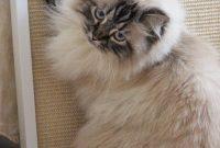 Katzen Kratzbrett für die Wand – DIY aus hundkatzemaus