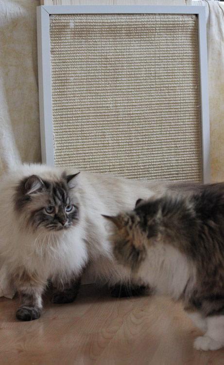 Katzen Kratzbrett mit zwei Katzen