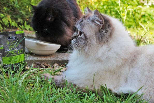 Katze isst wählerisch bzw. Katze isst schlecht- was kann man tun?