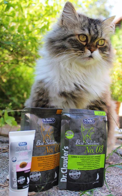 Katze isst wählerisch isst schlecht- was tun? Katzenfutter Dr. Clauder's