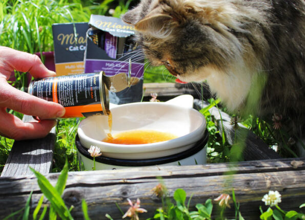 Miamor Katzendrink wird ausprobiert