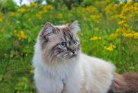 Vom Katzen-Impfpass und mehr/Meer – wenn Katzen Koffer packen