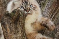 Katzen extrem- Hitze in Holland & Arktis daheim inkl. Erste Hilfe Tipps für Katzen