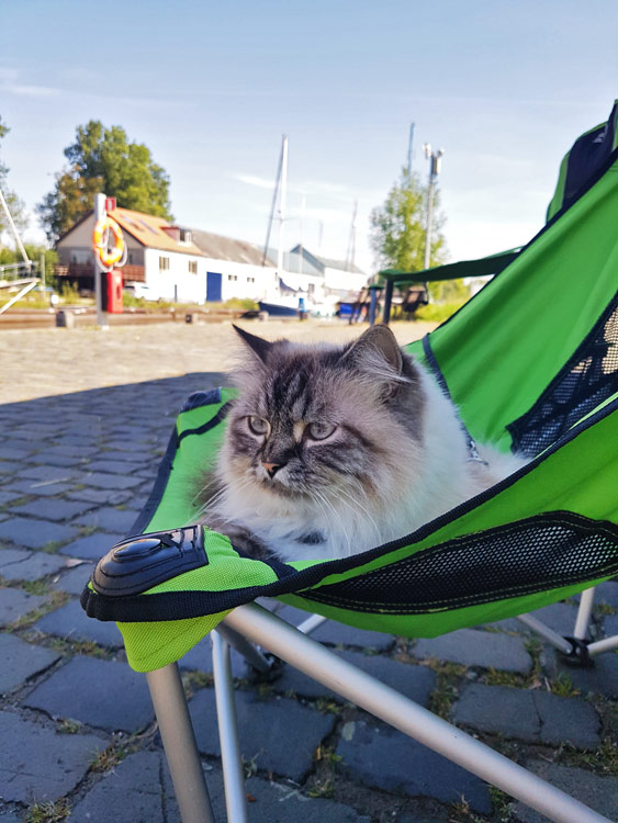 Katze macht Ferien im Liegestuhl bei Hitze