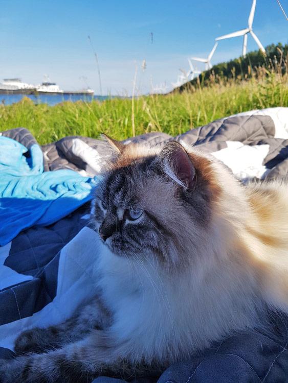Katze am Meer bei Hitze