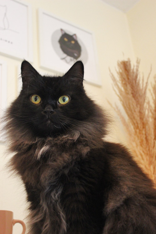 Katze Zorro mit Katzenportrait