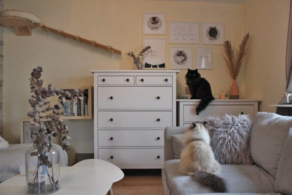 Katzen-Bilderwand mit Katzen im Wohnzimmer