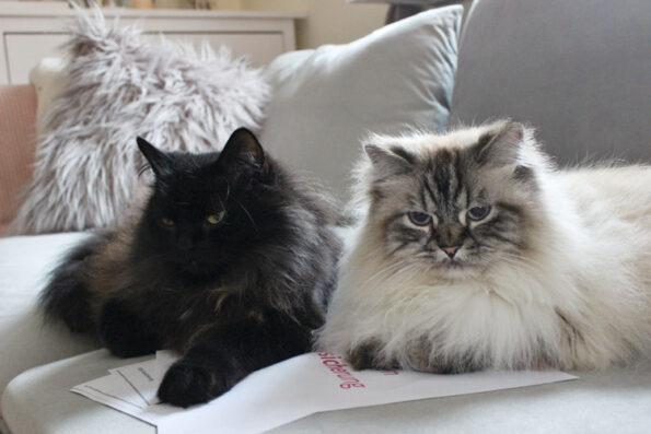 Katzenkrankenheiten, die Versicherungen abdecken
