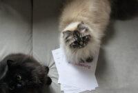 Gesunde Katze: Katzenversicherung & Katze im Notfall versorgen