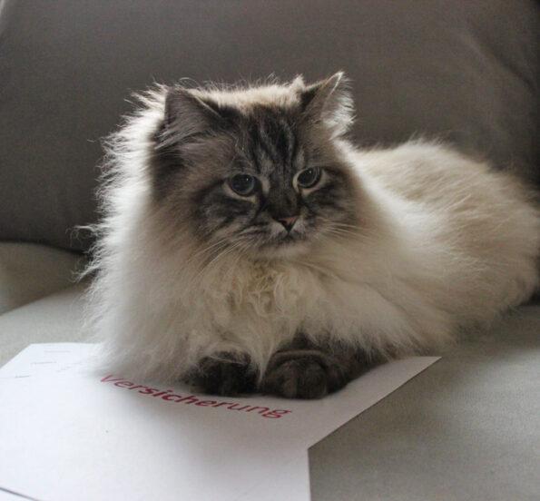 Katzenversicherungsvergleich