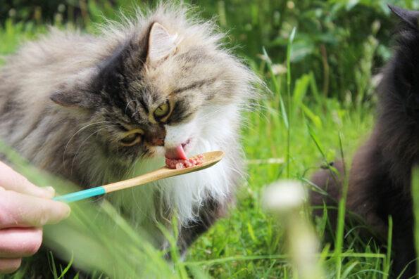Katzenfutter ohne Getreide im Test durch Katze- Miamor Feine Beute