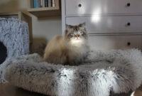 Kratzbaum- und Katzenbett-ABC – mit TRIXIE