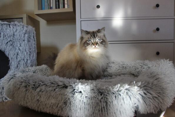 TRIXIE-Katzenbett-Harvey-eckig mit Katze Simba