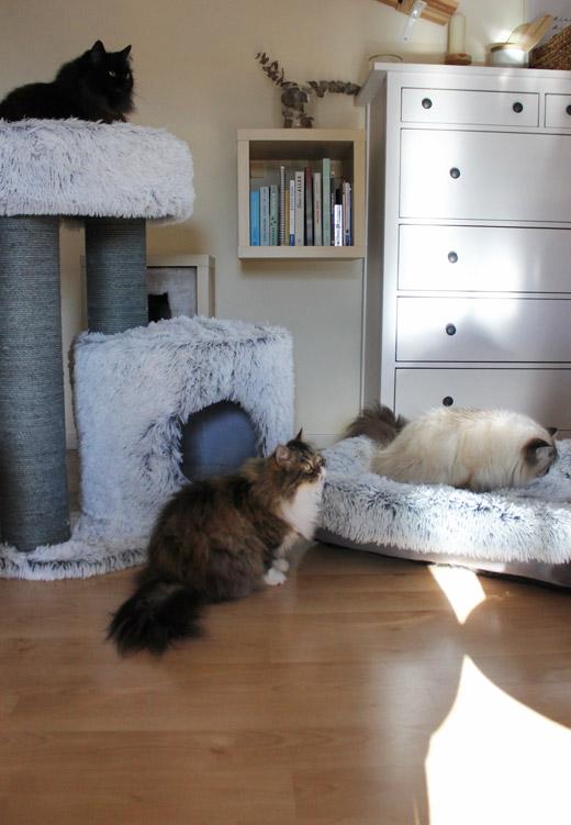 TRIXIE-Kratzbaum-Harvey-XXL mit allen Blogkatzen